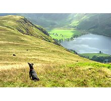 Tarn the Terrier... on High Snockrigg Photographic Print