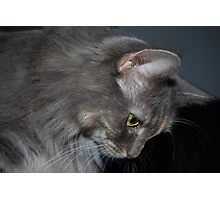 Mia The Maine Coon Cat Photographic Print
