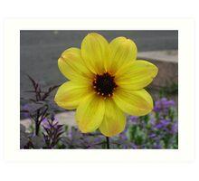NY: Yellow Flower Art Print