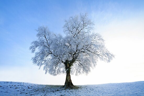 Cold Tree by EUNAN SWEENEY