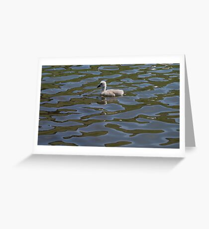 Lonely Cygnet Greeting Card