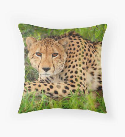 Cheetah - Okavango Delta, Botswana Throw Pillow