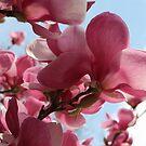 A Sky Full of Magnolias by ElyseFradkin