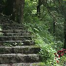 Steps in the Stone Garden by Jennifer Chan