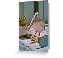 Pelikan in the old town on Mykonos, Greece Greeting Card