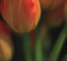 Tulips by Angela King-Jones