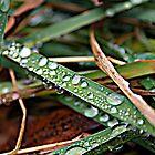 Life through Water Drops Pt.2 by fizzyart