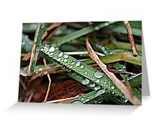 Life through Water Drops Pt.2 Greeting Card