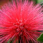Red Flower Hairdo by DARRIN ALDRIDGE