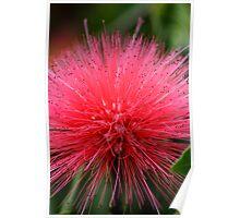 Red Flower Hairdo Poster