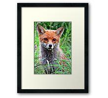 Curious Fox Cub Framed Print