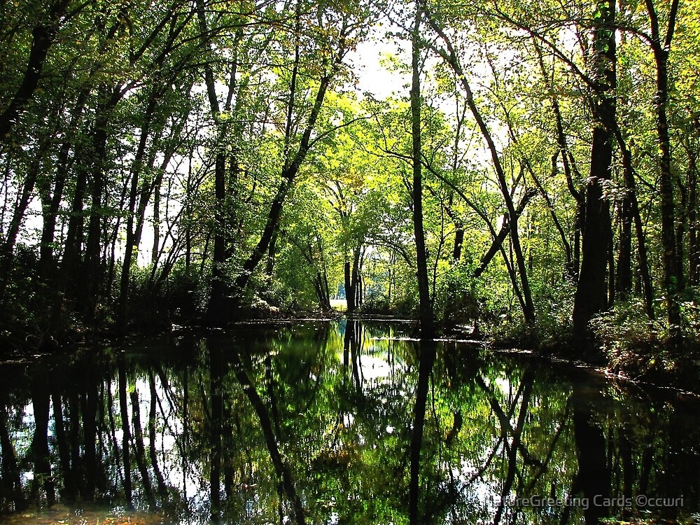 My Favorite Place Reflected by NatureGreeting Cards ©ccwri