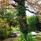 naturelove by ashleylkphotos