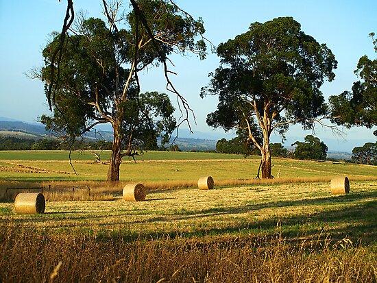 Hay Bales in the Fields - Drouin, Gippsland, Australia by Bev Pascoe