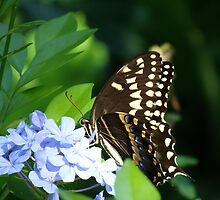 Butterfly at Disney's Animal Kingdom by bmwlego