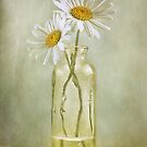 Daisy duo by Mandy Disher