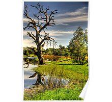 Billabong Dreaming - Wonga Wetlands, Albury NSW Australia - The HDR Experience Poster