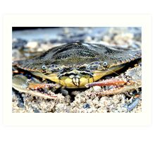 Blue Claw Crab in the Sand Art Print