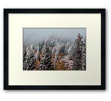 Clouded Forrest Framed Print