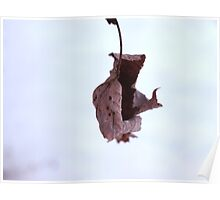Withered Leaf of Winter Poster