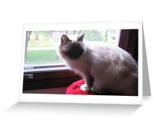 Amanda - Lovely Birman Girl Greeting Card