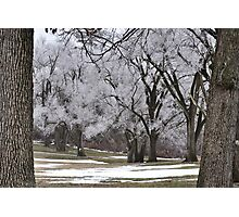 Wintry treescape Photographic Print