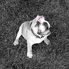 Beauty and the Beast; Flower & Bulldog by Namaste
