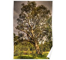 Strength - Wonga Wetlands, Albury NSW - The HDR Experience Poster