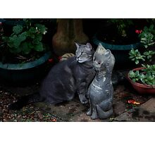 Pebbles and Friend. Photographic Print