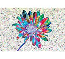 Rainbow Daisy Photographic Print