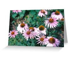 In The Flower Patch Greeting Card