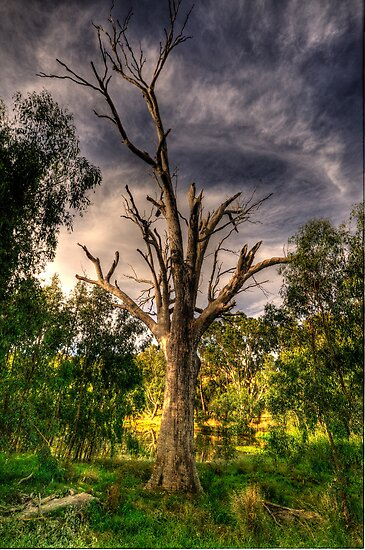 Reach For The Sky - Wonga Wetlands,Albury - The HDR Experience by Philip Johnson