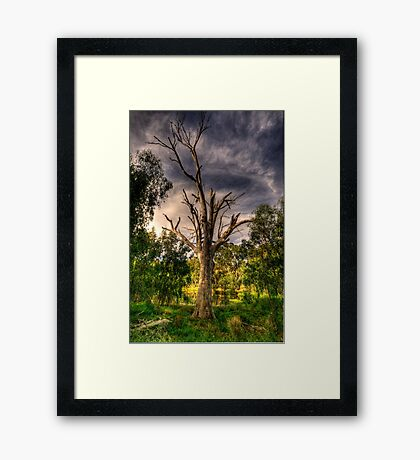 Reach For The Sky - Wonga Wetlands,Albury - The HDR Experience Framed Print