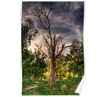Reach For The Sky - Wonga Wetlands,Albury - The HDR Experience Poster