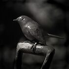 Immortal Bird by Christine  Wilson Photography