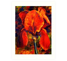 The Red Iris Art Print