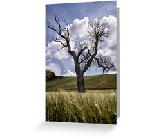 Dead Tree Dancing In A Cornfield Greeting Card