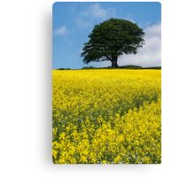 Sunshine Growing At The Roots Of A Tree Canvas Print