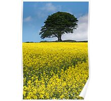Sunshine Growing At The Roots Of A Tree Poster