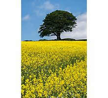Sunshine Growing At The Roots Of A Tree Photographic Print