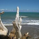 Beach: Natural Worn Tree by Jessica Snyder