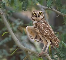 Wide Eyed and Alert by Sue  Cullumber