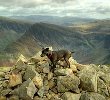 Tarn the Terrier... on High Crag by Jamie  Green