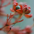 Blossoming... by preciouslily