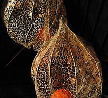 Alien Seeds by Anina Arnott