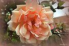 Dusky Rose by naturelover