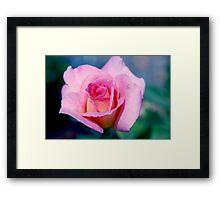 Pink Beauty Queen Framed Print