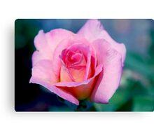 Pink Beauty Queen Canvas Print