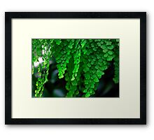Maiden Hair Fern Framed Print