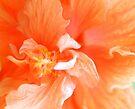 Orange Hibiscus Art by Kim McClain Gregal